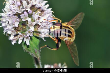 Insekten Stockbild
