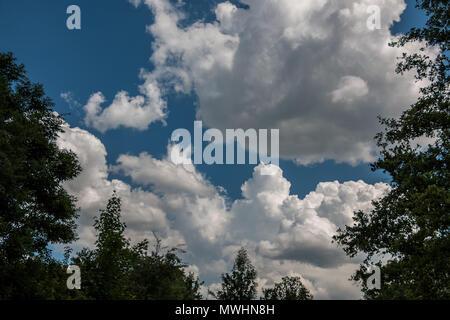 Der Wald und die tiefen blauen Himmel mit weißen Wolken Stockbild