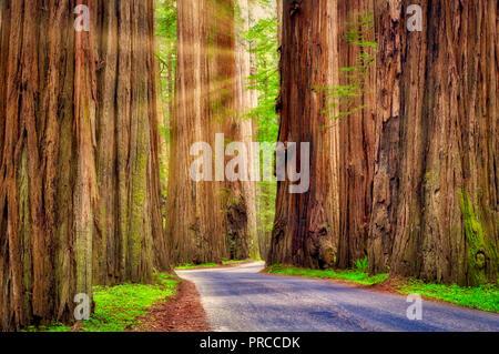 Straße durch Humbolt Redwoods State Park mit redwoods. Kalifornien Stockbild