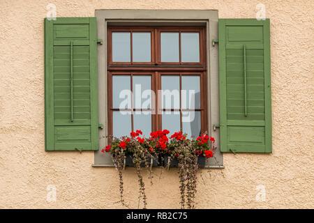Mit grünen Fensterläden und eine Blume mit roten Blumen Fenster Stockbild