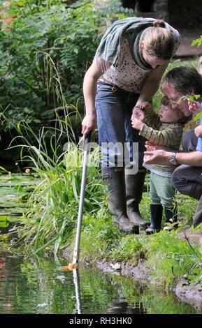 Familie Teich eintauchen und der Inspektion der Fänge während ein Bioblitz, Abbot's Pool, Bristol, Großbritannien Stockbild