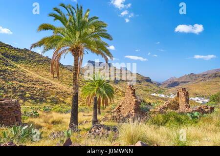 Kanarischer Landschaft mit Palmen, Gran Canaria, Kanarische Inseln, Spanien Stockbild