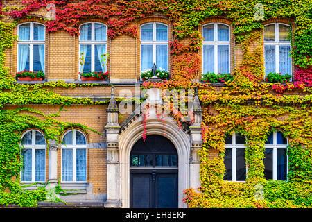 Reben bedeckt Gebäudefassade in Berlin, Deutschland. Stockbild