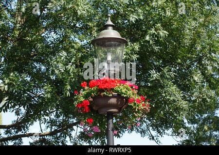 Alte Straßenlaterne dekoriert mit roten Geranien, Buxtehude, Altes Land, Niedersachsen, Deutschland, Europa ich mit roten Geranien geschmückte alte Straßenlater Stockbild