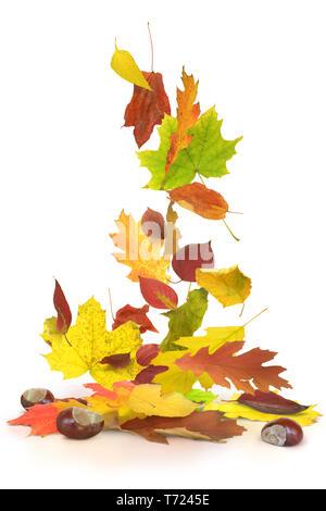 Herbst 18. Stockbild