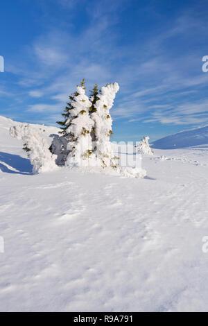 Gefrorene Bäume in eine verschneite Winterlandschaft in Trysil, Norwegen. An einem sonnigen Tag fotografiert. Stockbild