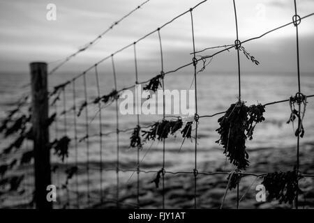 Schmutzige Geländer gegen Meer in der Abenddämmerung Stockbild