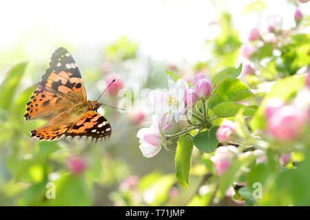 Schmetterling 224 Stockbild