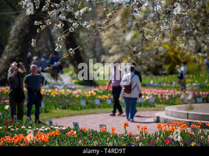 Berlin, Deutschland. 18 Apr, 2019. Besucher ansehen sunny Tulpen und Kirschbäume blühen in den Britzer Garten. Credit: Monika Skolimowska/dpa-Zentralbild/dpa/Alamy leben Nachrichten Stockbild