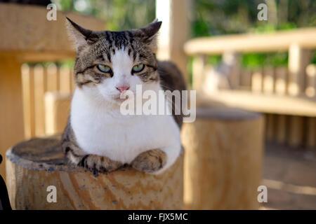 Porträt von Katze auf hölzernen Sitz im Pavillon Stockbild