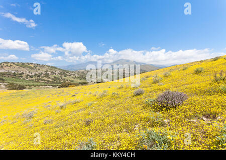Kreta - Griechenland - Blütenmeer in Agia Galini, Europa Stockbild