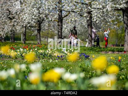 Berlin, Deutschland. 18 Apr, 2019. Die Besucher gehen unter blühenden Kirschbäumen im Britzer Garten bei schönem Wetter. Credit: Monika Skolimowska/dpa-Zentralbild/dpa/Alamy leben Nachrichten Stockbild