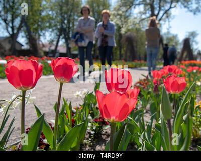 Berlin, Deutschland. 18 Apr, 2019. Besucher vorbei an blühenden Tulpen im Britzer Garten bei schönem Wetter. Credit: Monika Skolimowska/dpa-Zentralbild/dpa/Alamy leben Nachrichten Stockbild