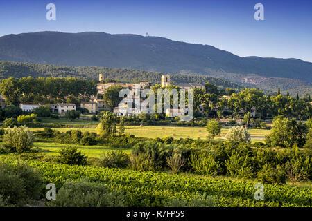 Weinberg, Cuceron, provencialischen Dorf, Departement Vaucluse, Luberon, Provence, Frankreich Stockbild