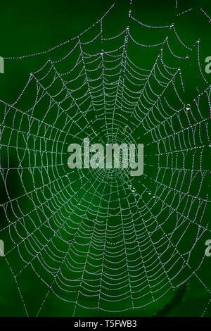 Web Tautropfen net, araku, Visakhapatnam, Andhra Pradesh, Indien, Asien Stockbild