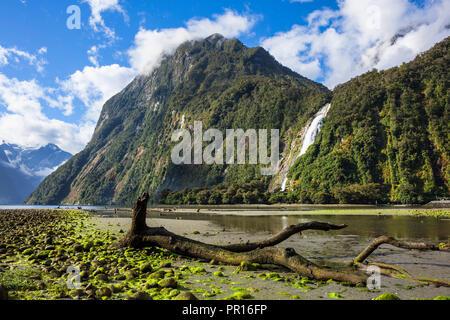 Toter Baum, Cascade Range und Bowen fällt, Milford Sound, Fiordland Nationalpark, UNESCO-Weltkulturerbe, Südinsel, Neuseeland, Pazifische Stockbild