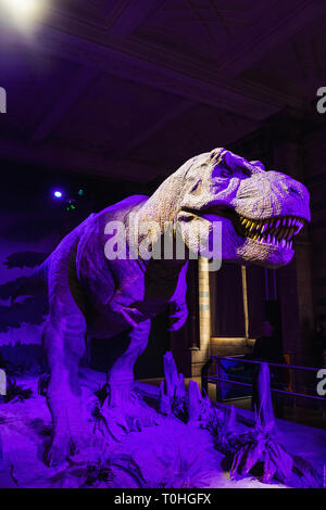 England, London, South Kensington, das Natural History Museum, Animatonic Modell eines Tyrannosaurus Rex Dinosaurier Stockbild