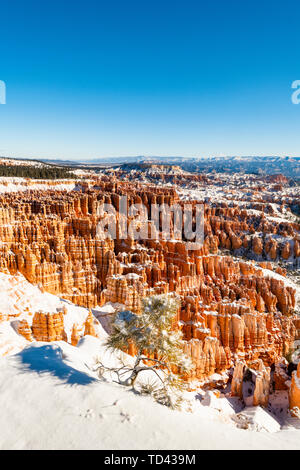 Bryce-Canyon-Nationalpark, Utah, Vereinigte Staaten von Amerika, Nordamerika Stockbild