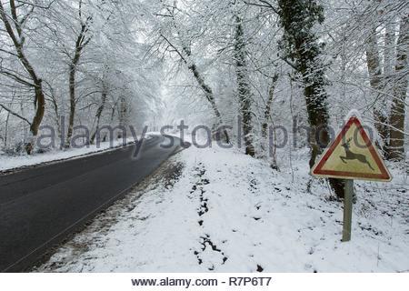 Frankreich, Seine-et-Marne, Bois le Roi, D 137 im Wald von Fontainebleau unter dem Schnee Stockbild