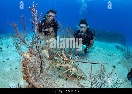 Langusten sucht Schutz gegen ein Stück Wrack. Stockbild