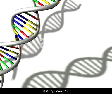 Doppelhelix der Desoxyribonukleinsäure (DNA) Stockbild