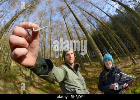 Keil Prisma relaskop verwendet, um die Dichte der Bäume in einem nadelwald Plantage aufzeichnen, Cambrian Mountains, Wales, Großbritannien Stockbild