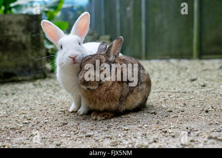 Porträt von Kaninchen auf Feld Stockbild