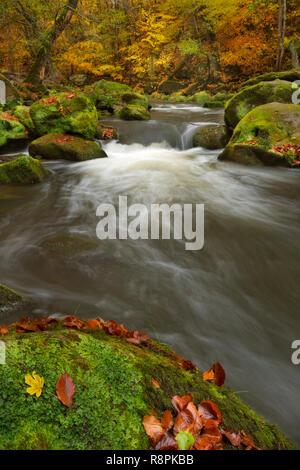 Fluss durch einen Wald in der Nähe von Irrel in Deutschland. Stockbild