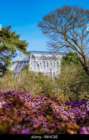 Gewächshaus des Botanischen Gartens Berlin Dahlem im Frühjahr Stockbild