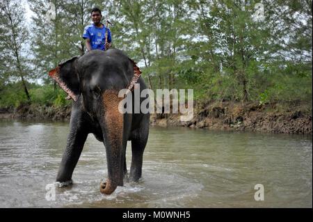 Asiatischer Elefant Tourismus Stockbild