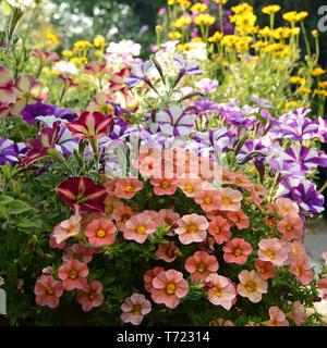 Blumen 459 Stockbild