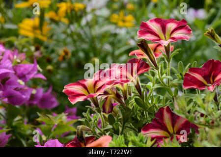 Blumen 362 Stockbild