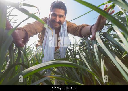 Gerne Landwirt in seiner Landwirtschaft Feld berühren das hohe Gras. Stockbild