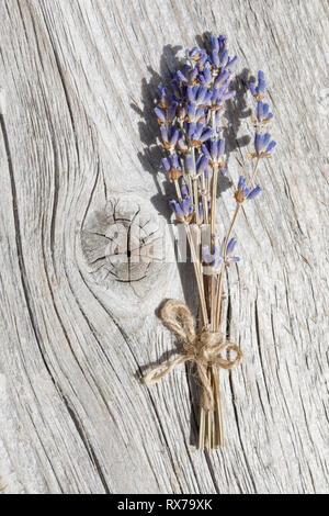 Botanik, Lavendel, Lavendelstraeusschen, No-Folded-Card oder Greeting-Card oder Postcard-Use, weltweit, unbegrenzte Zeit, Stockbild