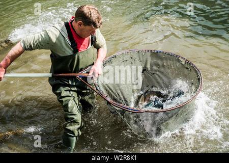 Hohe Betrachtungswinkel und der Mann, der watvögel in einem Fluß, der große Fisch net mit Forellen. Stockbild