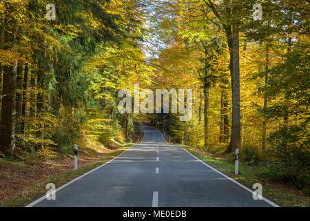 Waldweg im Herbst in Spiegelau im Nationalpark Bayerischer Wald in Bayern, Deutschland Stockbild