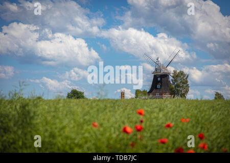Eine alte Windmühle steht auf einem rapsfeld vor einem blauen Himmel mit weißen Wolken Stockbild