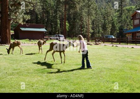 Ein junges Mädchen, Fütterung der Hirsche Stockbild