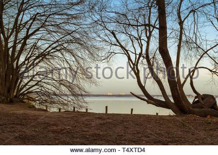 Meer gebogene Zweige Stockbild
