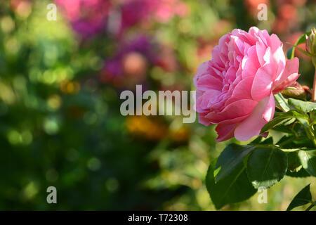 Blumen 412 Stockbild