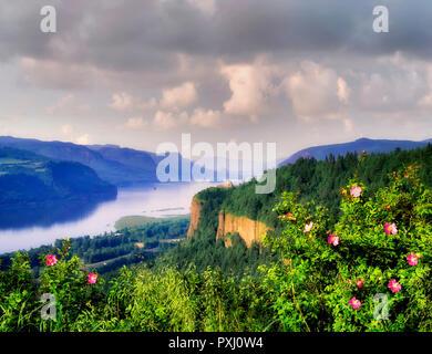 M00241M.TIFF Columbia River Gorge und Crown Point mit Rosen. Columbia River Gorge National Scenic Bereich, Oregon Stockbild