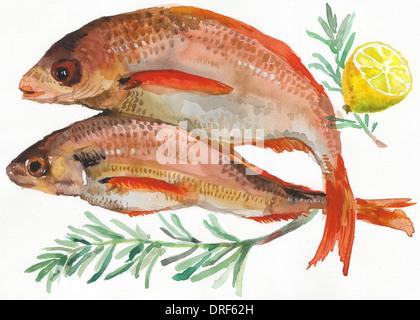 Fischen Sie auf weißen Hintergrund mit Zitronenscheibe und Kräuter Stockbild