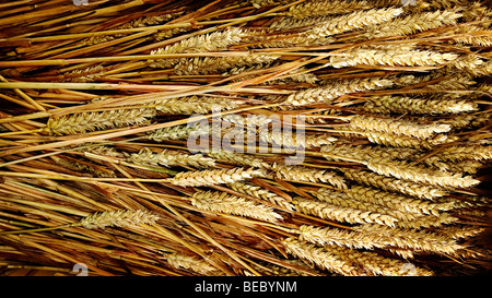 Weizen Kernel Stockbild