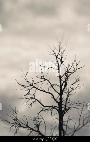 Toter Baum Silhouette mit dunklen und bedrohlichen Himmel. Dramatische und geheimnisvolle Natur Szene. Stockbild
