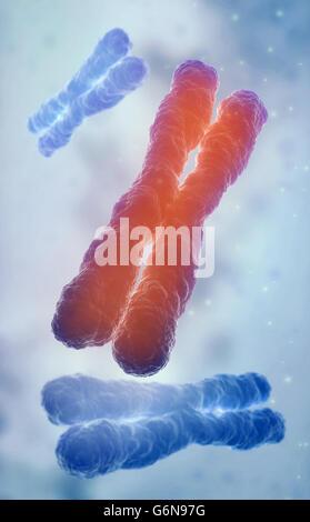 Chromosom 3D-Modell - Genetik-Abbildung Stockbild
