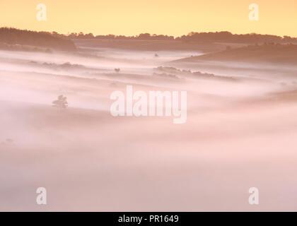 Eine grosse Decke der Morgendämmerung Nebel fließt das Tal hinunter, so dass nur noch Bäume und Sträucher über steigende, New Forest, Hampshire, England, Vereinigtes Königreich Stockbild