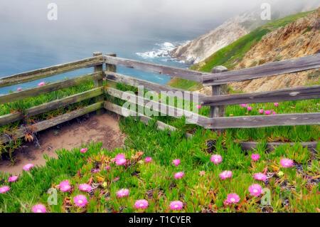 Blühende eis Pflanzen und Zaun mit Blick auf das Meer. Point Reyes National Seashore. Kalifornien Stockbild