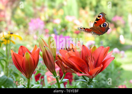 Butterfly441 Stockbild