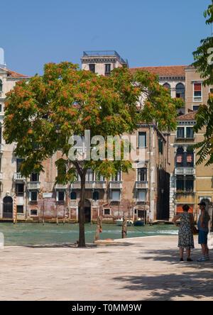 Platz mit einem großen Baum, Region Veneto, Venedig, Italien Stockbild