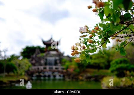 Niedrigen Winkel Blick auf Blumen blühen im Park Stockbild